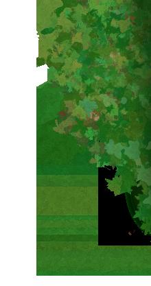 Puu :)