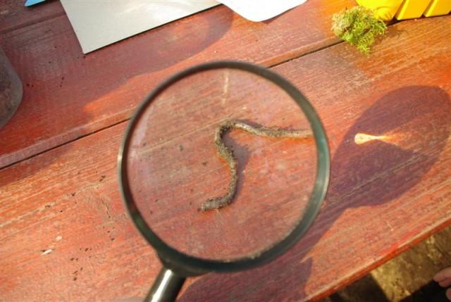 Uurimine