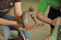 """RMK õppeprogramm """"Orav ja kobras"""" 1.r ja 6.r 02.05.2012"""